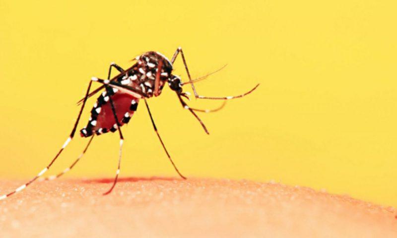Ampliação da Vacinação de Febre Amarela no Brasil